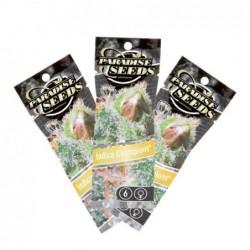Paradise Seeds Ice Cream...
