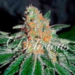 Delicious Seeds CBD Jam (3UDS)