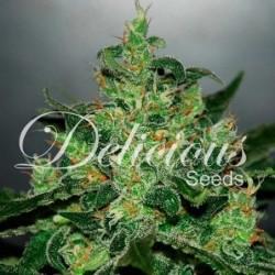 Delicious Seeds Critical...