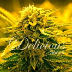Delicious Seeds Sugar Black...