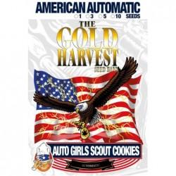 Gold Harvest Auto Girl...