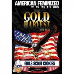 Gold Harvest Girl Scout...