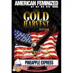 Gold Harvest Pineapple...