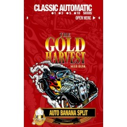 Gold Harvest Auto Banana...