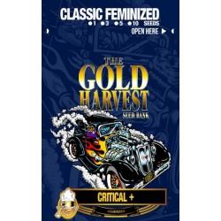 Gold Harvest Critical + (3uds)