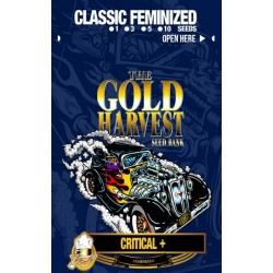 Gold Harvest Critical + (5uds)