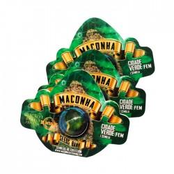 Maconha Seeds Xama (1ud)
