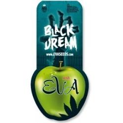 Eva Seeds Black Dream (3+1)