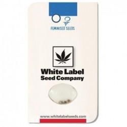 White Label WHITE GOLD (3UDS)