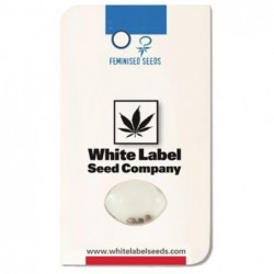 White Label MASTER KUSH (3UDS)