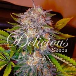Delicious Seeds Caramelo...